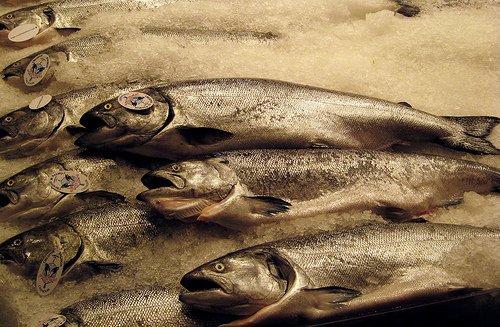 Reich an ungesättigten Fetten: fetter Seefisch wie Lachs