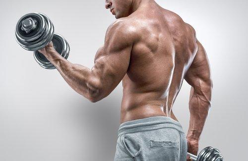 Trainingsmethoden Muskelaufbau