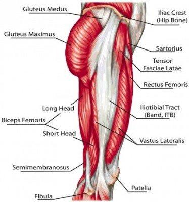 Hip Thrust Muskeln