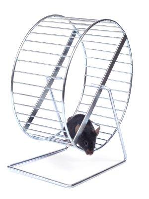 Muskelaufbau und Fettabbau gleichzeitig: Das ideale Hamsterrad