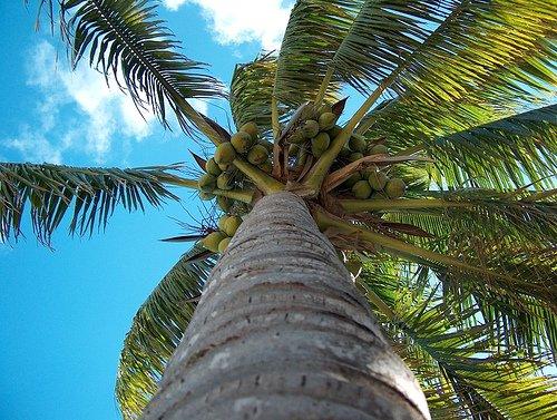 Warum Kokosnussöl gesund ist