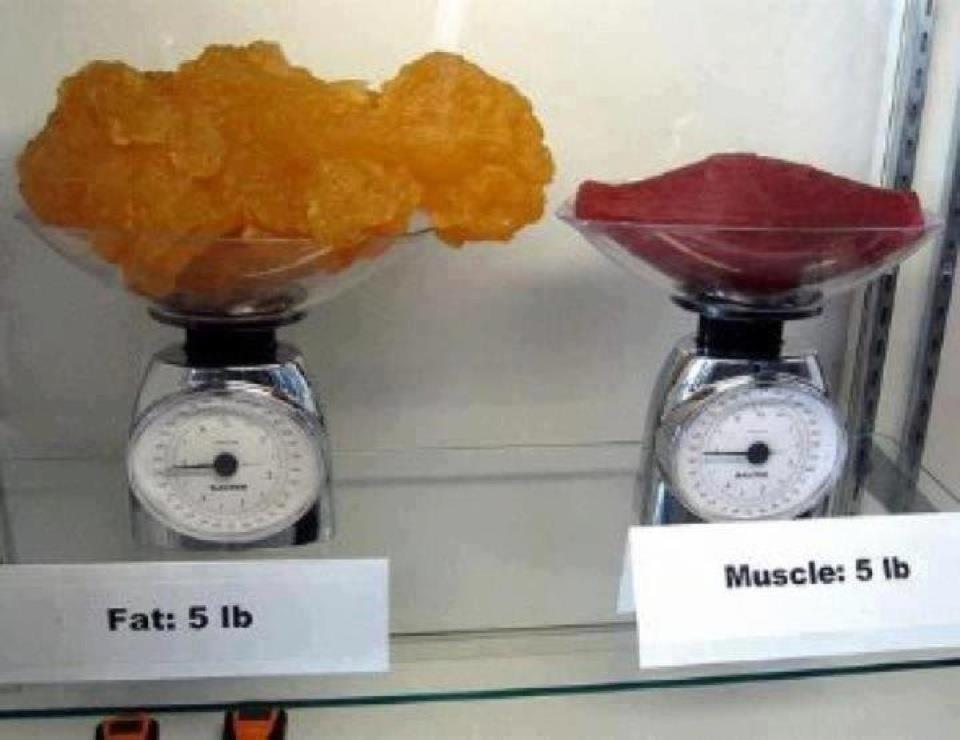 Proteinmenge zur Gewichtsreduktion 10 kg in Pfund