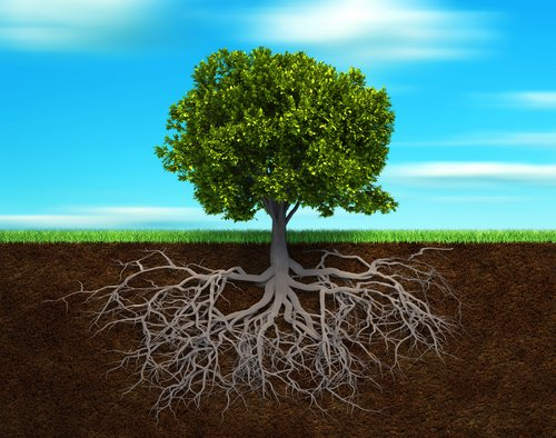 Baum ich nehme nicht ab