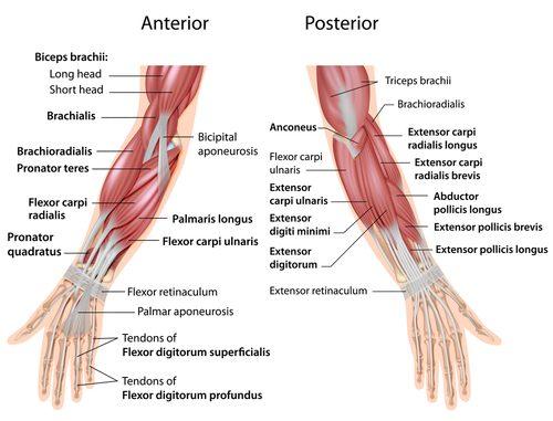 Armtraining: Die besten Übungen für Dein Arm Workout