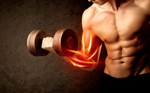 Magnesium Muskelaufbau