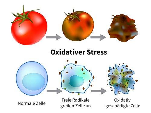 Freie Radikale und oxidativer Stress bei Sekundärstoffen