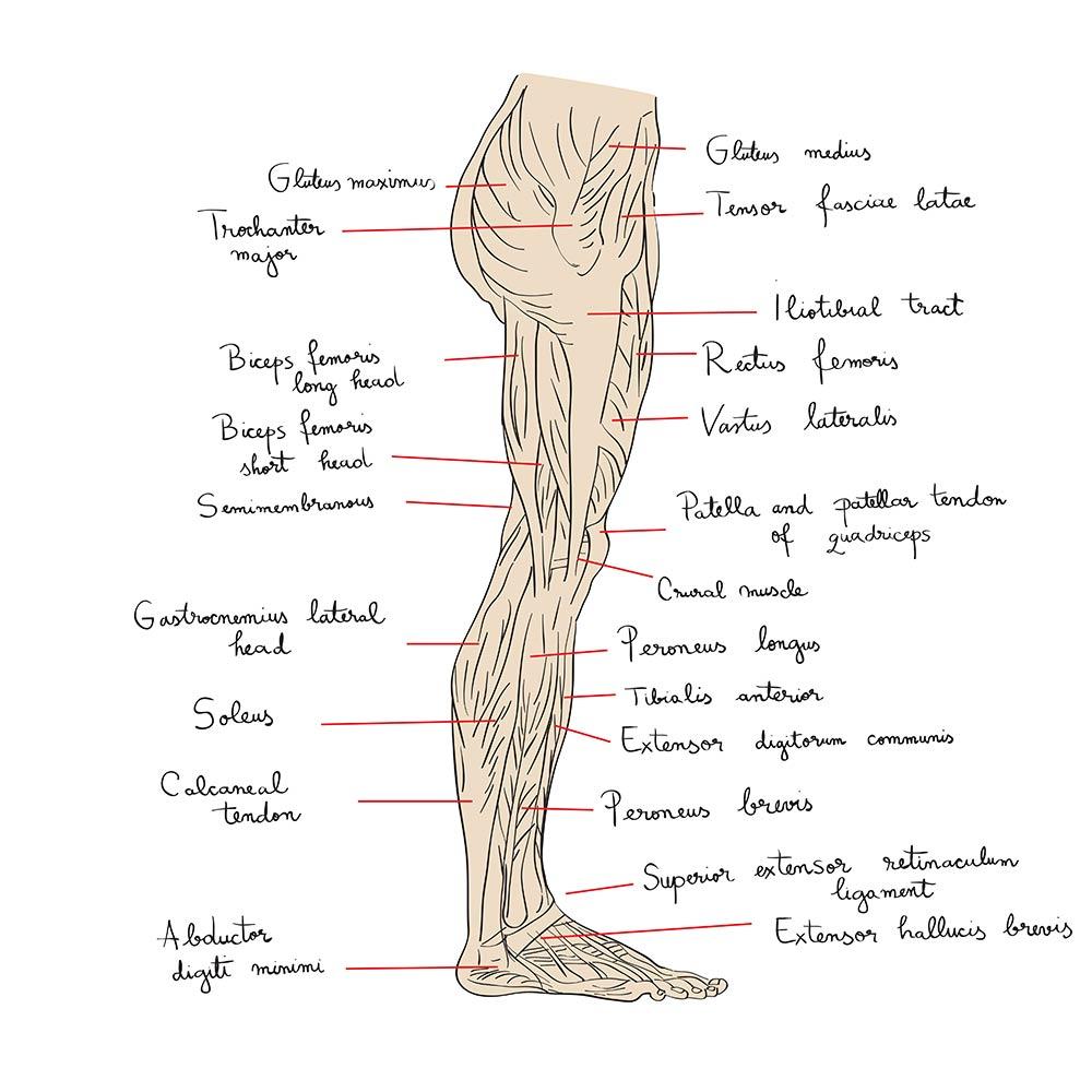 Beinmuskeln: Anatomie der Beinmuskulatur (Skater Squat)