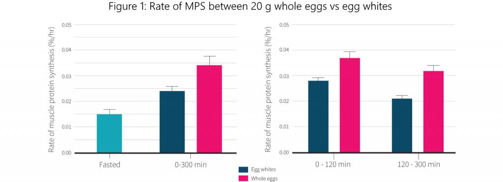 Wieviel Protein hat ein Ei?